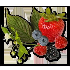 BerryGroup