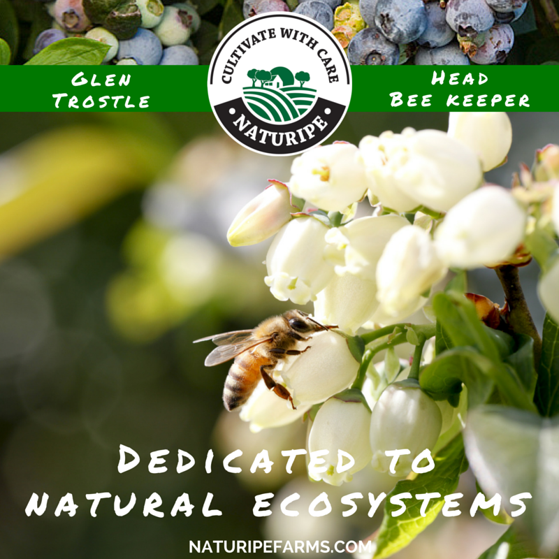 Glen Trostle, Head Bee Keeper – Dedicated to Natural Ecosystems